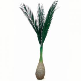Palmier 200cm