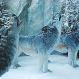 Loup hurlant 103cm