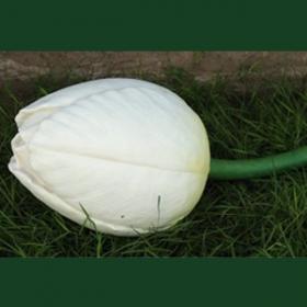 Bouton de tulipe blanc 40cm