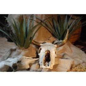 Plante Yucca 50cm