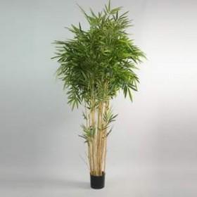 Bambou 200cm