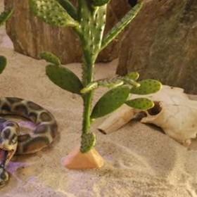 Cactus 80cm
