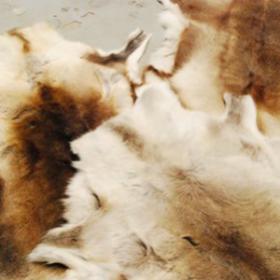 Peau de renne 130cm