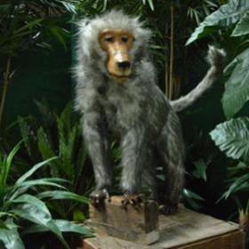 Singe babouin 120cm