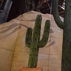 Cactus 156cm