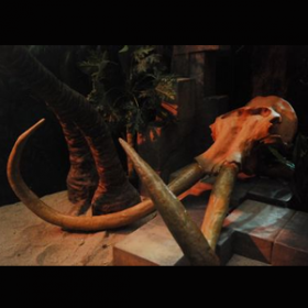 Crâne mammouth 290cm