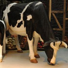 Vache pâturage 160cm