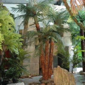 Palmiers 320cm