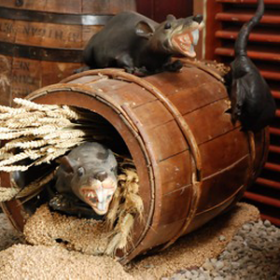 Rats dans baril 96cm