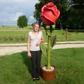 Rose XL