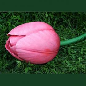 Bouton de tulipe rose 40cm