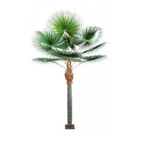 Palmier 230cm