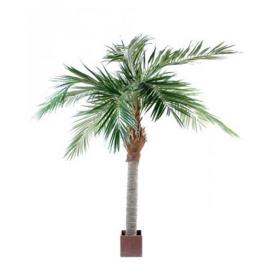 Palmier 250cm