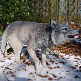 Loup de la maison Stark