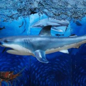 Requin 270cm