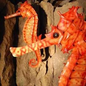 Hippocampe 104cm