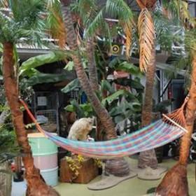 2 palmiers avec hamac 100cm