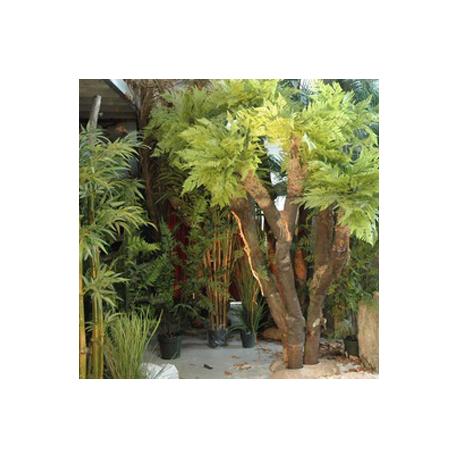 Plante fougère 1