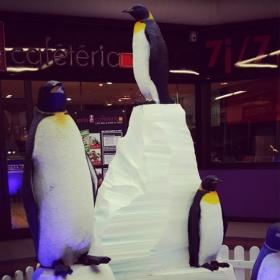 Pingouin 70cm