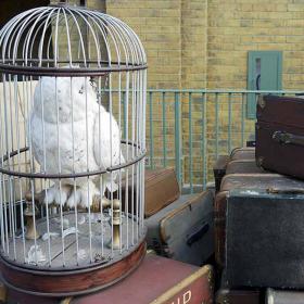 Chouette en Cage