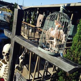Squelette oiseau en cage