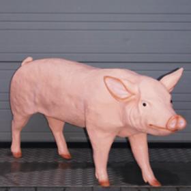 Cochon 100cm