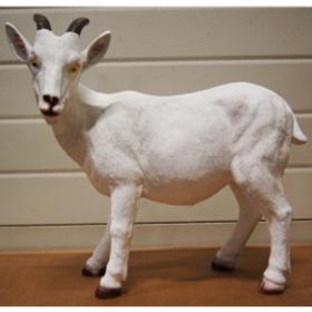 Chèvre 47cm