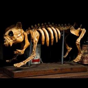 Squelette de Chien