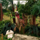 Décopack Dinosaure