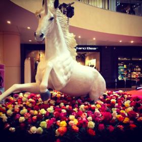 Licorne 297cm