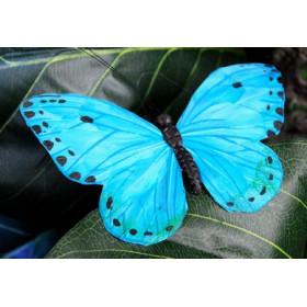 Papillon bleu XL
