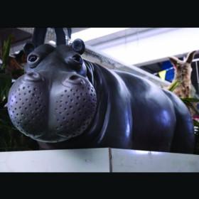 Hippopotame nageur