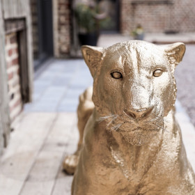 Statue Lionne colorée