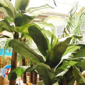 Bananier 290cm
