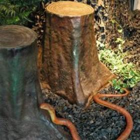 Souche d'arbre, siège 60cm